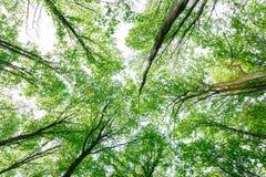 绿色落叶林在一个晴天 图库摄影