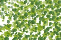 绿色落的叶子秋天背景 免版税库存照片