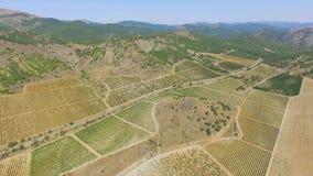 绿色葡萄园在夏天,空中录影 影视素材