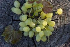 绿色葡萄 免版税库存照片