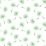 绿色蒲公英播种在白色背景的花卉绒毛样式 库存图片