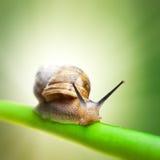 绿色蜗牛词根 图库摄影