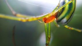 绿色蜘蛛 免版税库存照片