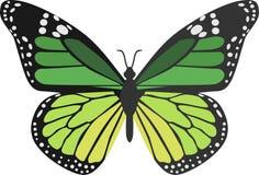 绿色蝴蝶 库存例证