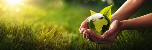 绿色行星在您的手上 背景关心概念环境查出小的作为结构树白色 库存照片