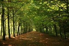 绿色行结构树 免版税库存图片