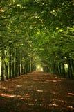 绿色行结构树 免版税库存照片