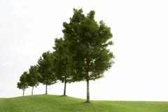 绿色行结构树 免版税图库摄影
