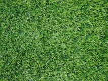 绿色表面纹理草皮 库存图片