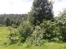 绿色被看见的树和天空 库存照片