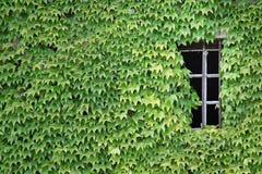 绿色视窗 图库摄影