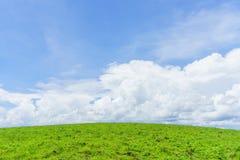 绿色象草的小山和软的蓝天覆盖 免版税库存图片