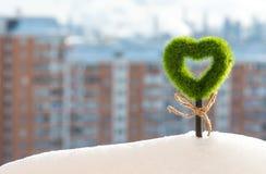 绿色象草的心脏增长在随风飘飞的雪外面 库存照片