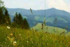绿色豪华的草特写镜头在树木丛生的山前面的在Sl 免版税库存照片