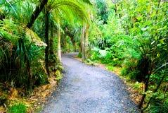 绿色豪华的雨林 免版税库存图片
