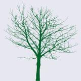 绿色赤裸结构树 库存例证