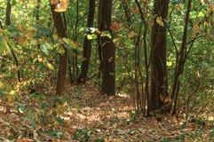 绿色走和跑的森林土壤肮脏的道路 免版税库存图片
