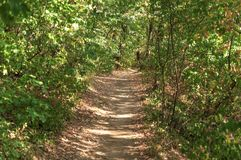 绿色走和跑的森林土壤肮脏的道路 图库摄影