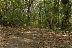 绿色走的和跑的车道的森林土壤肮脏的道路 库存照片