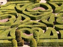 绿色迷宫 免版税库存照片