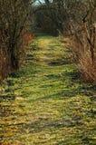 绿色道路在森林里在春天 免版税库存图片
