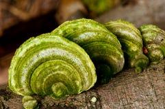 绿色采蘑菇架子 免版税库存照片