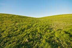绿色重点横向塑造了 免版税图库摄影