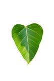 绿色重点爱世界 库存图片