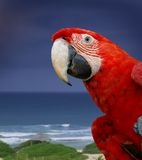 绿色金刚鹦鹉鹦鹉翼 库存照片