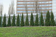 绿色针叶树行在铁栅格后的外面在草 库存照片