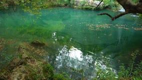 绿色镇静水在池塘 股票录像