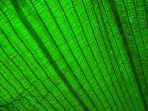 绿色阴影网纹理 库存图片