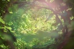 绿色隧道在阳光下 免版税库存图片