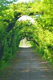 绿色隧道 库存图片