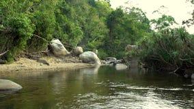 绿色雨林风景的河 绿色热带森林和岩石河沿岸航行美好的风景狂放的自然 影视素材