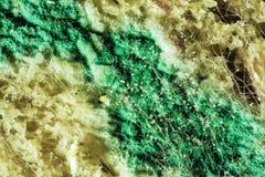 绿色霉菌模子,看法传播在被损坏的食品的通过显微镜 图库摄影