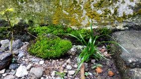 绿色青苔和野生植物 库存图片