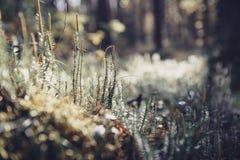绿色青苔在阳光下 草背景光和bokeh 与Instagram样式过滤器的自然背景 秋天色的森林 免版税库存图片