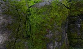 绿色青苔岩石 图库摄影