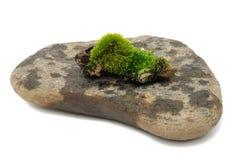 绿色青苔石头 图库摄影