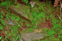 绿色青苔纹理和背景在石自然 库存图片