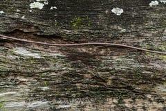 绿色青苔纹理和背景在石自然 库存照片