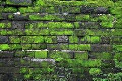 绿色青苔老石墙 免版税图库摄影