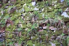 绿色青苔老石纹理墙壁 免版税图库摄影