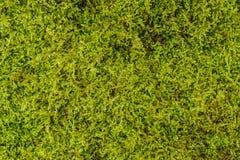 绿色青苔背景纹理美好本质上 特写镜头 库存图片