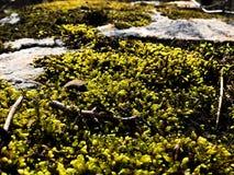 绿色青苔被盖的岩石 免版税库存图片