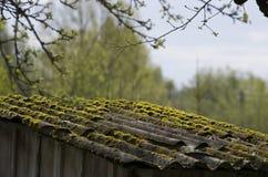 绿色青苔隐蔽的老石板屋顶 免版税库存图片
