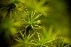 绿色青苔 免版税库存图片