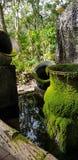 绿色青苔pottrey 免版税库存图片