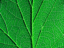 绿色页结构树 免版税库存图片